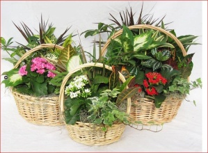 Wicker European Garden Basket
