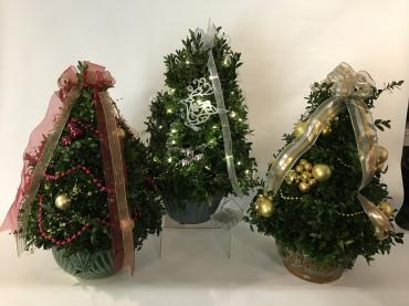 Custom Designed Boxwood Trees